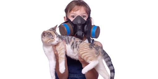 حساسیت به گربه